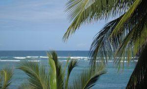 Image of ocean and palm trees taken at Diani Beach, Kenya, 2011